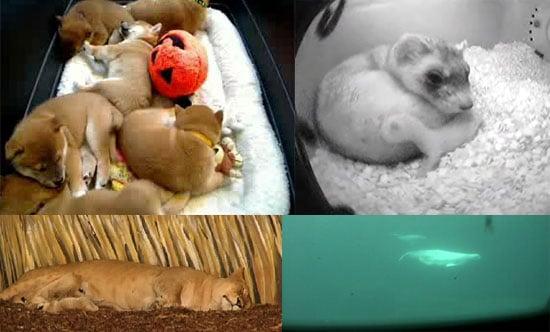 Live Animal Webcams Making Internet Fun