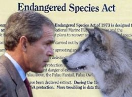 Administration Diverts Comments On New Endangered Species Act
