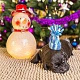 Mid-Christmas Nap