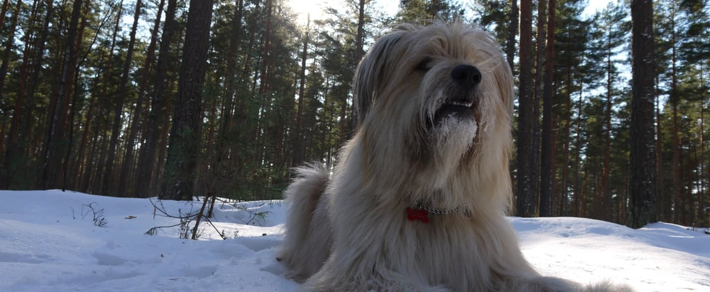 Make Sure You Know When Temperatures Reach Dangerous Levels For Your Dogs