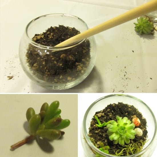 Planting the Succulents