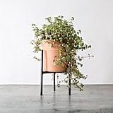 Iron Plant Stand ($18)