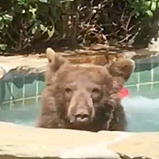 Reactions to Margarita Jacuzzi Bear Video