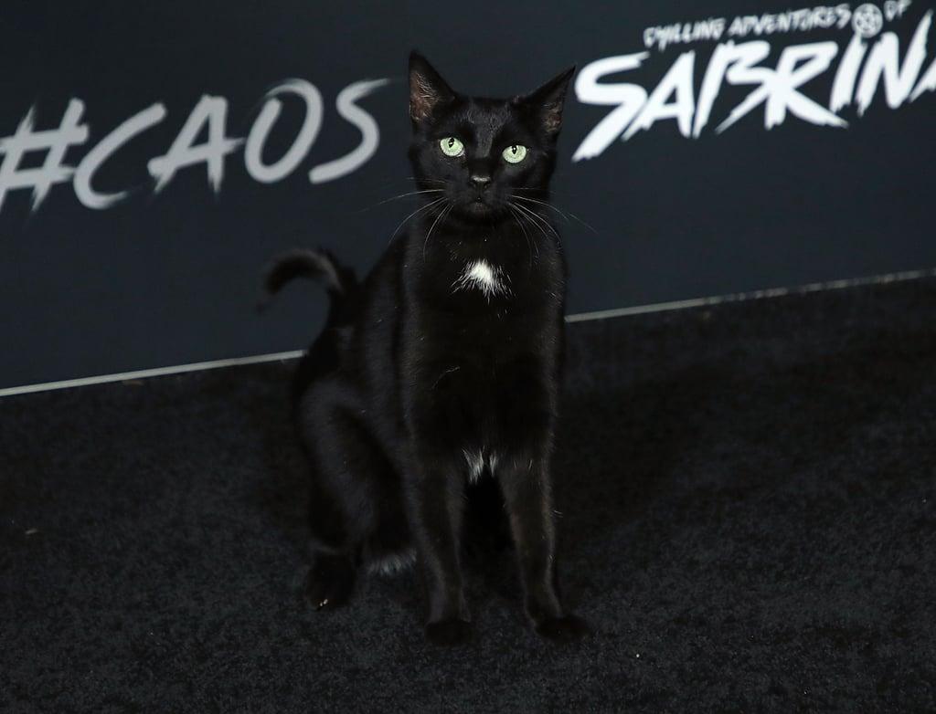 Salem the Cat on Sabrina Netflix Red Carpet Photos 2018