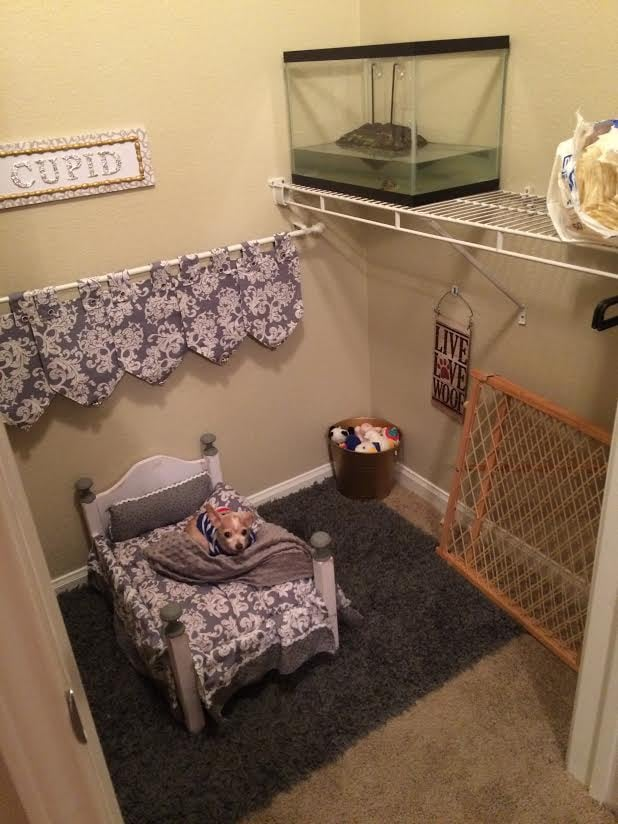 College Student Turns Closet Into a Bedroom For Dog