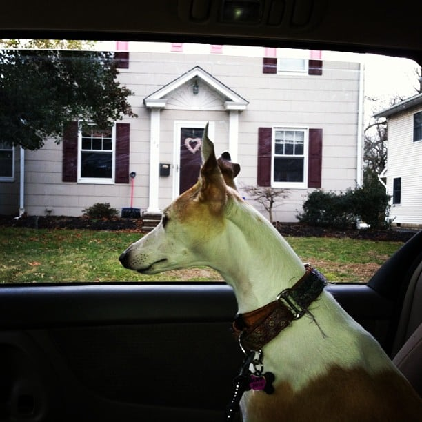 No, the yard isn't big enough. Will I ever find the perfect home? Source: Instagram user davepowitz