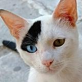 Unique Kitty