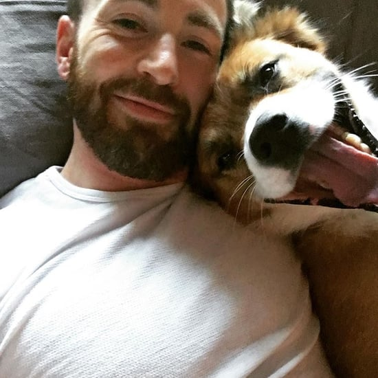 Everything We Know About Chris Evans's Dog, Dodger