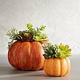 Pottery Barn Succulent in Pumpkin