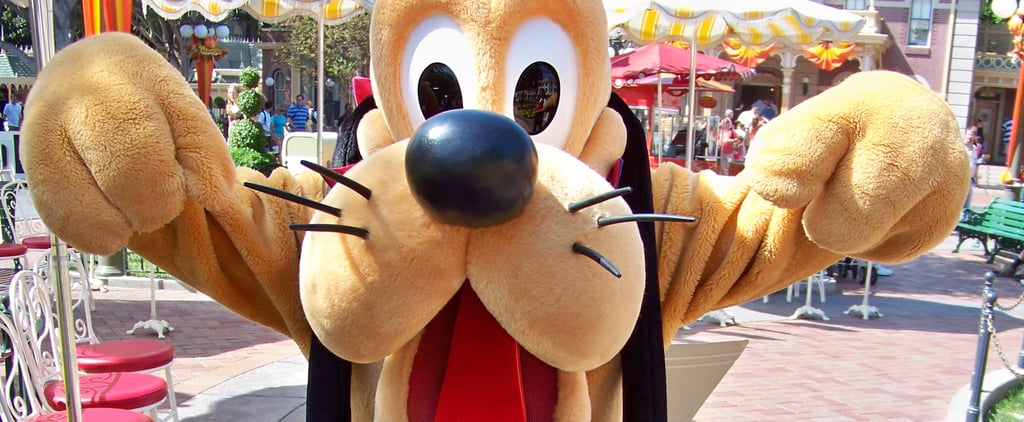 Are Dogs Allowed at Disney World Resorts?