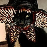 Cat Cosplaying as the Demogorgon From Stranger Things
