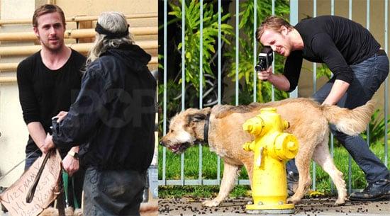 Photos of Ryan Gosling Filming His Dog and Talking to Vietnam Vet in LA