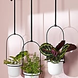 Triflora Hanging Planters, Set of 3