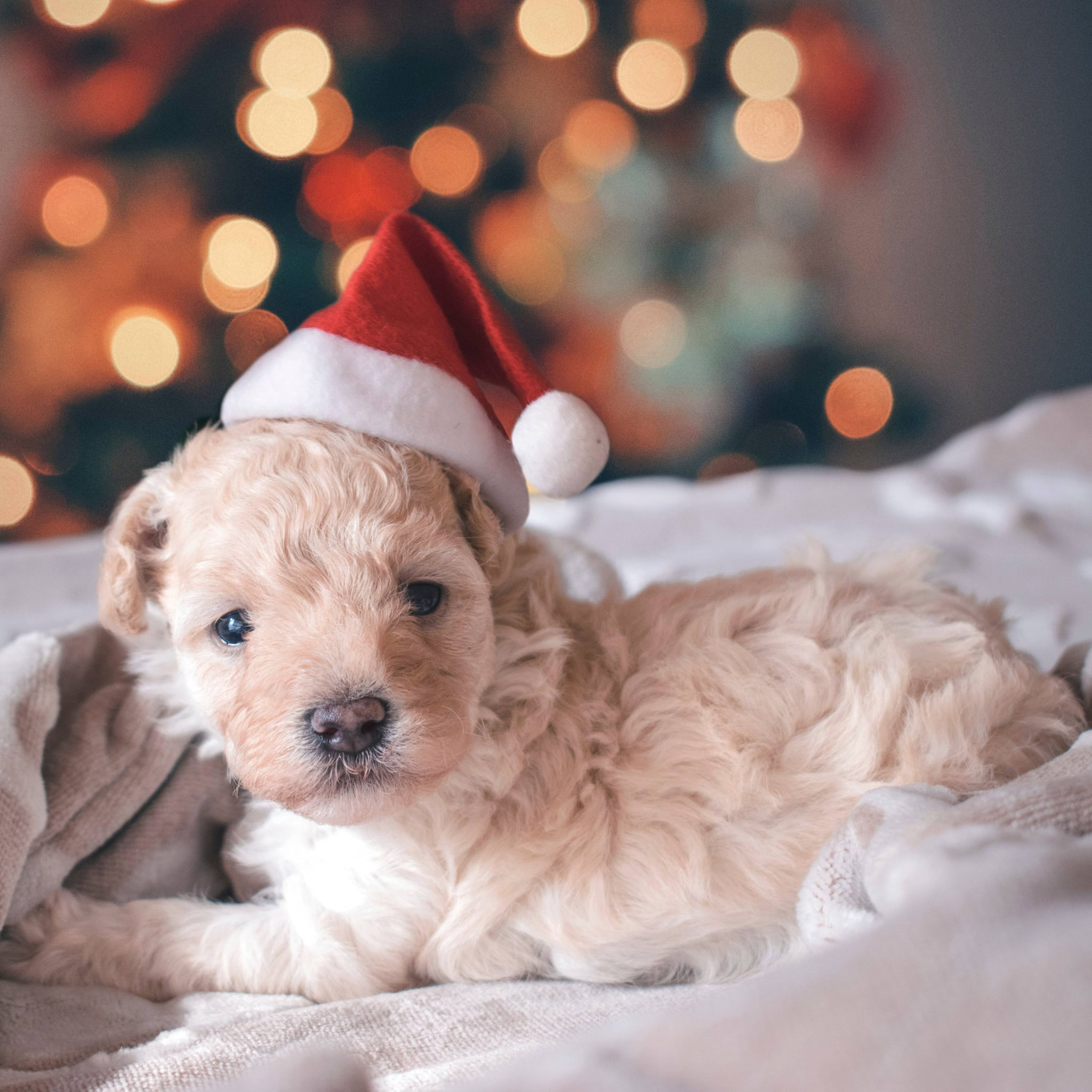 A Puppy For Christmas.Why You Shouldn T Give Kids A Puppy For Christmas Popsugar