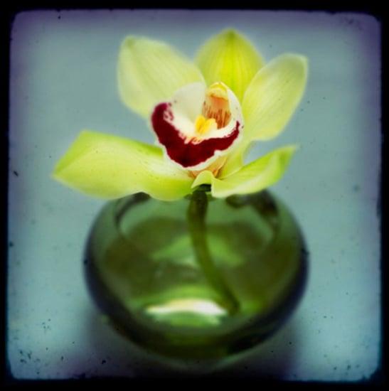 Casa Craving Challenge: Verdant Vases