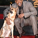 Will Smith smiled big with a canine friend in LA in December 2007.