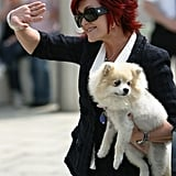 Rest In Peace: Sharon Osbourne's Beloved Minnie Passes Away