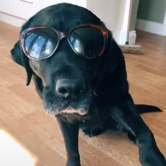 "Videos of Dogs in Sunglasses Dancing to ""Banana"" on TikTok"