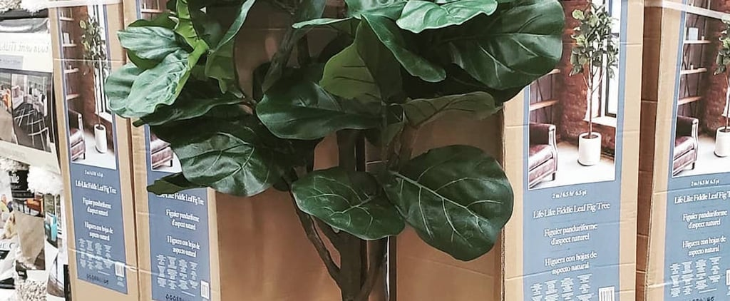 Costco's Faux Fiddle Leaf Fig Trees