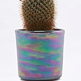 Oil Slick Planter ($15)