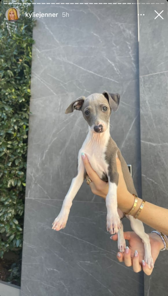 More Photos of Kylie Jenner's Dog Kevin