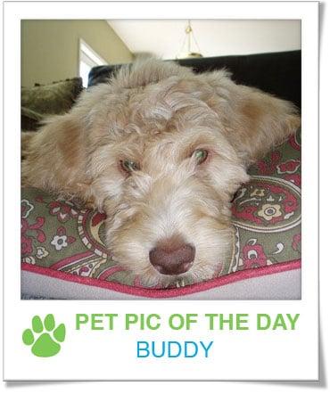 Pet Pics on PetSugar 2009-03-26 09:30:48