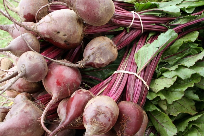Is It OK to Eat Beet Greens?