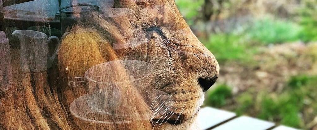 The Big Cat Safari Lodge in Kent