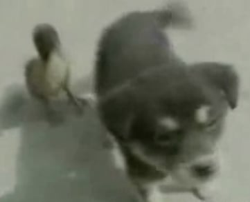 Cute Alert: Duckling + Puppy = BFF