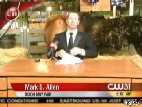 Reporter Attempts to Work in Front of Crapping Cows