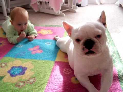 Video of Dog Teaching a Baby to Crawl