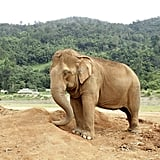 Visit the Elephant Nature Park in Chiang Mai