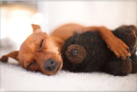 Cuddle Up, Baby!