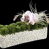 Ovando Orchid Arrangement
