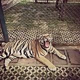 الذهاب إلى حديقة الحيوان
