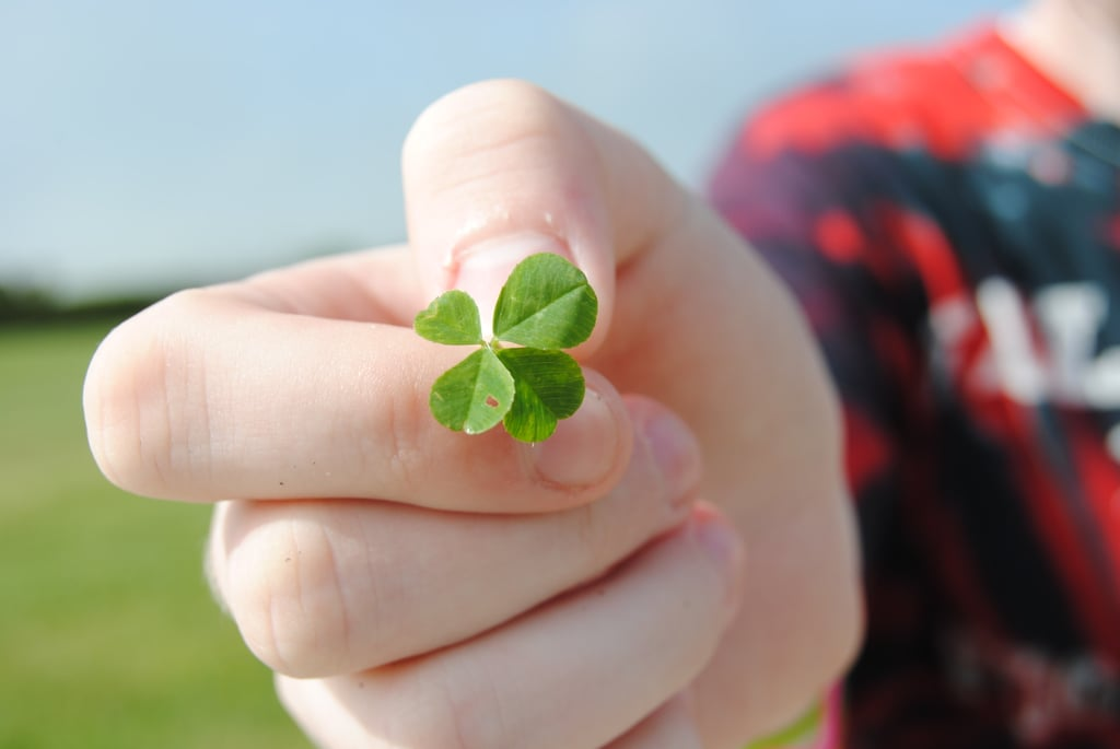 Look For Four-Leaf Clovers