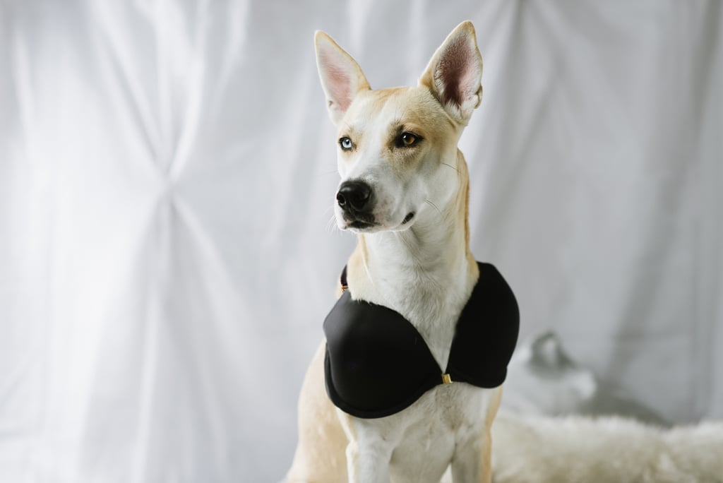 Bra For Dogs Popsugar Pets