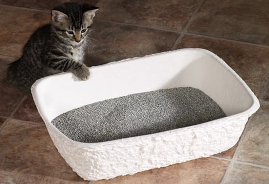 Pampered Pals: Porta-Potties For Kitties