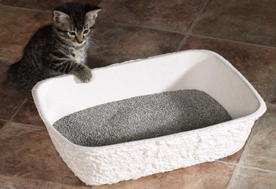 Pampered Pals: Porta-Potties For Kitties