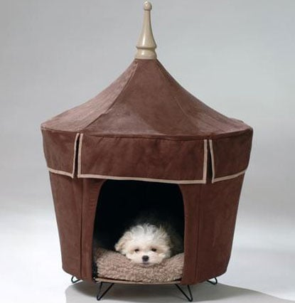 Pet Tent: Spoiled Sweet or Spoiled Rotten?