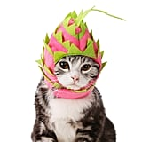 Pitaya Cat Hat
