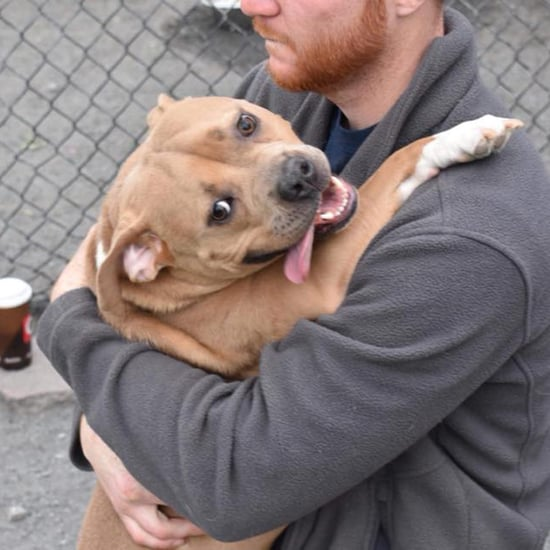 Dog Returned to Shelter For Being Too Nice