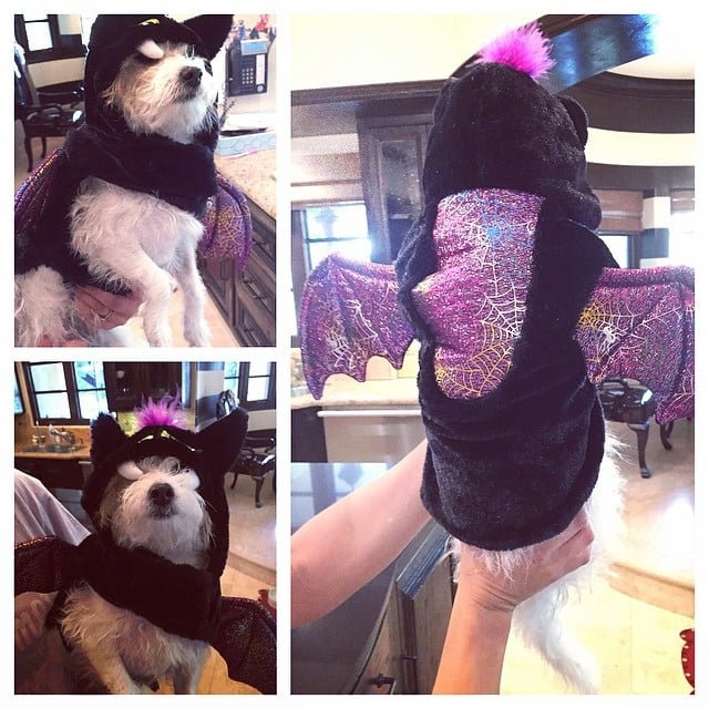 Kaley Cuoco showed off her cute dog's bat costume.