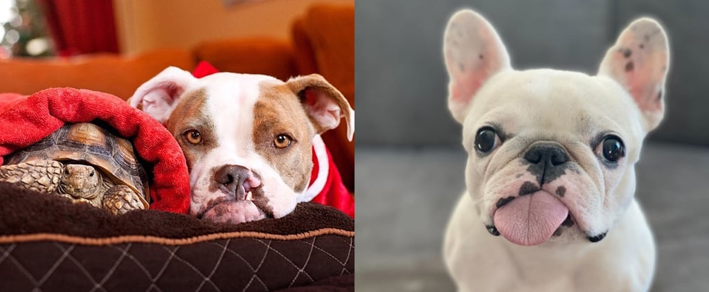Where to Find the Pets of Netflix's Pet Stars on Instagram