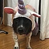 Nina Dobrev and Her Dog's Unicorn Costumes Halloween 2018