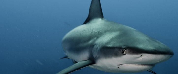 Take a Huge Bite Outta This Shark Quiz!