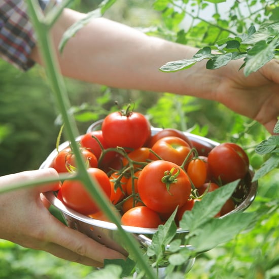 How to Plant and Grow Tomato Plants