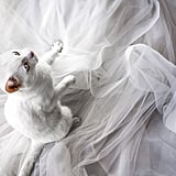 Wedding Photos With Cats