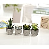 Assorted Decorative Artificial Succulent Plants