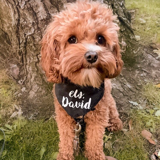 15 Cute Schitt's Creek Dog Bandanas